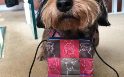 Pouches for Pooches!